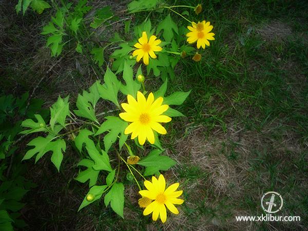 Clases de flores amarillas tipos de flores clases de - Clases de flores amarillas ...