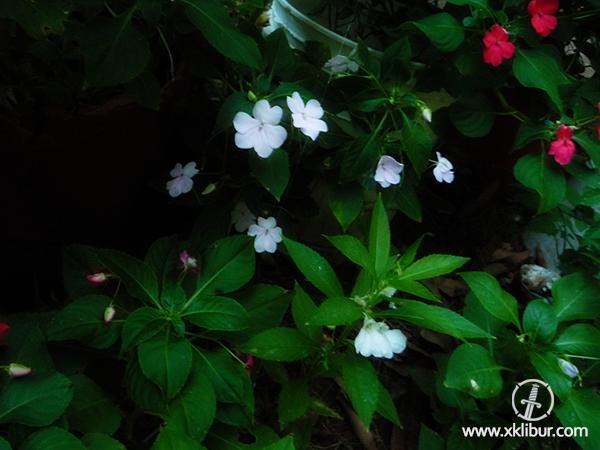 Flores Flores Y Mas Flores